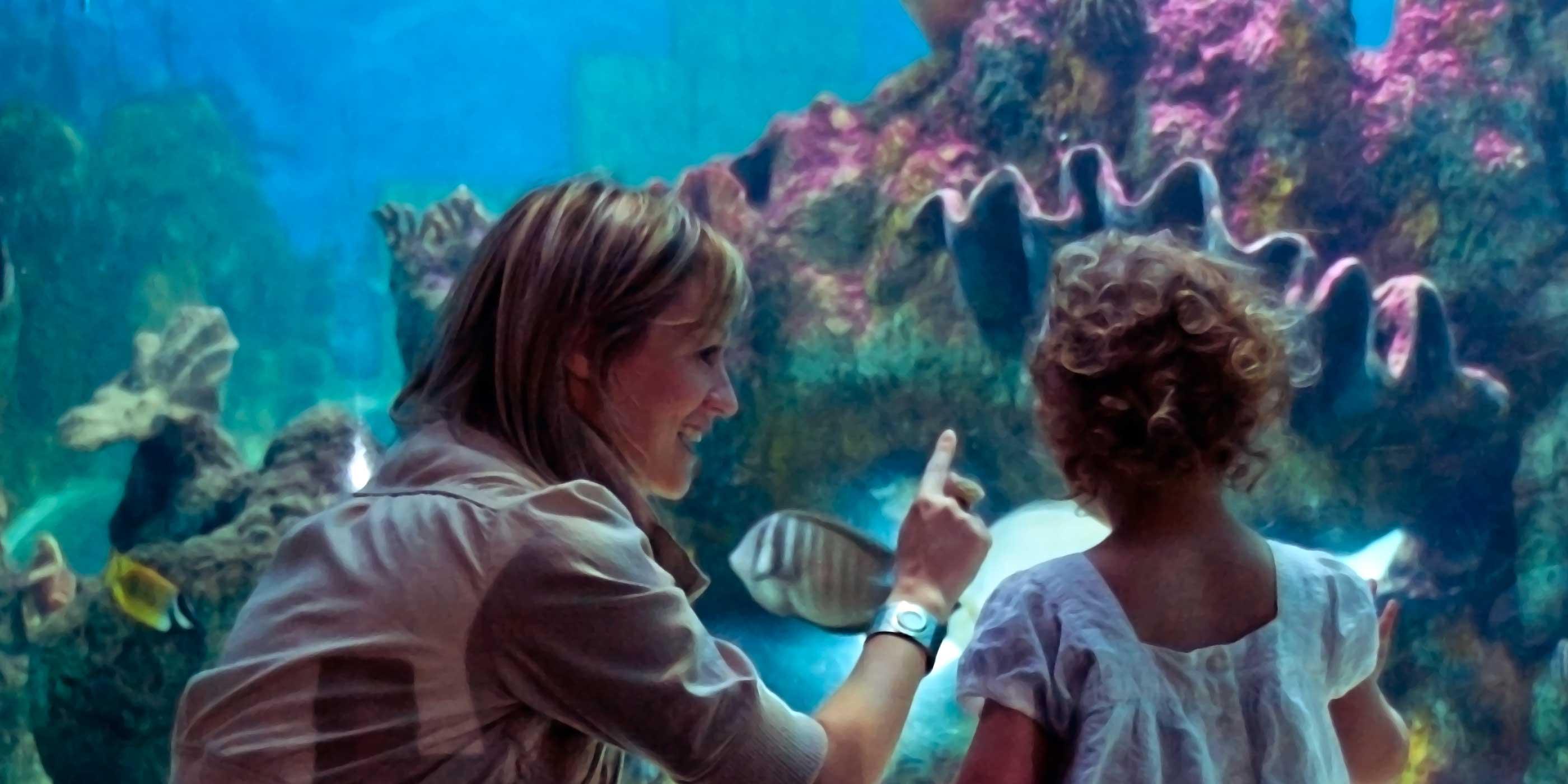blue reef aquarium tynemouth home