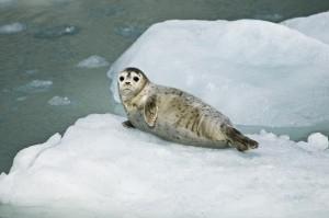 seal habitat
