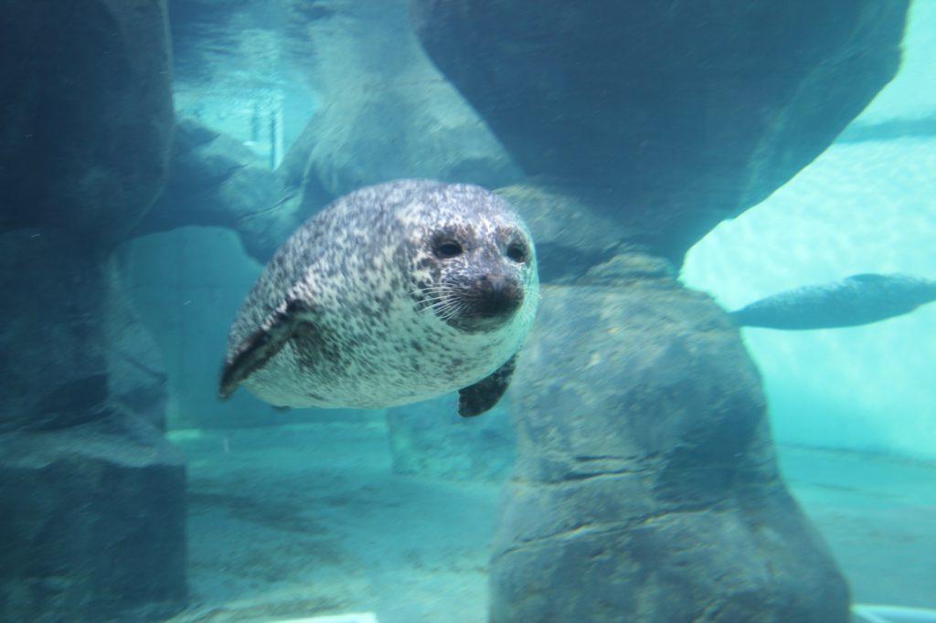 tynemouth seal