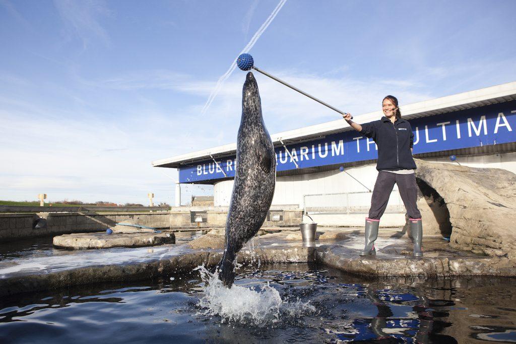 seal feed tynemouth aquarium