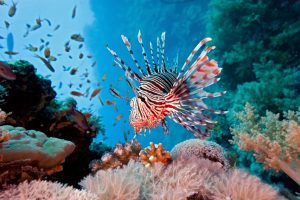 lionfish in coral reef header image