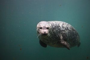 seal header