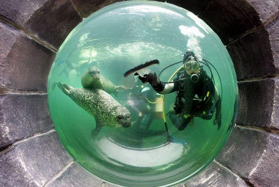 diver and seals